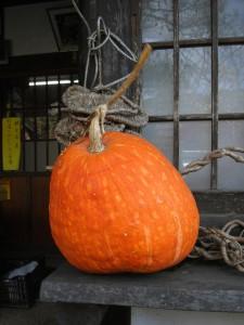 大きなかぼちゃ! 売店に飾ってあります。