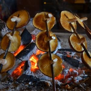囲炉裏で焼く原木しいたけ