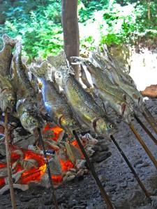 捕まえたマスは囲炉裏で塩焼き。