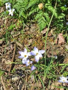 春の花01