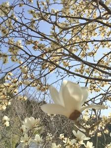 春の花03