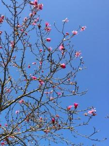 春の花05
