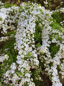 春の花06