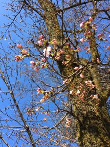 春の花07