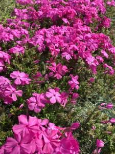 春の花08