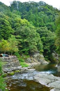 涼しい川辺でキャンプ