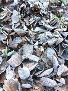 落ち葉にも霜が付いて真っ白