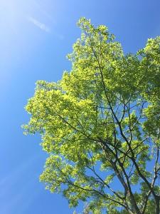 新緑と青い空がきれいです