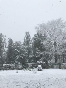 積雪5センチくらい