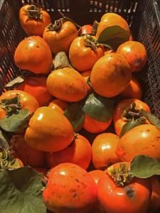 収穫したはちや柿