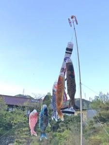 大きな鯉のぼり