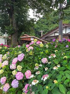 歩道からの武州日野駅