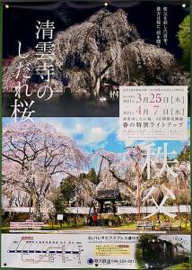 清雲寺のしだれ桜ポスター